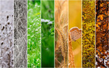 Four seasons collage: Winter, Spring, Summer, Autumn. - 60868787