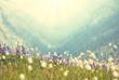Obrazy na płótnie, fototapety, zdjęcia, fotoobrazy drukowane : Mountain meadow