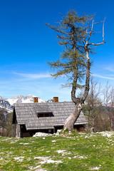 chalet in Slovenia in spring