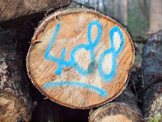 sawn log with painted code
