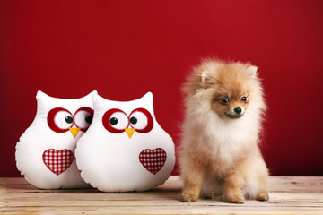 Adorable pomeranian next to owls