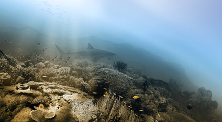 Seabed and shark