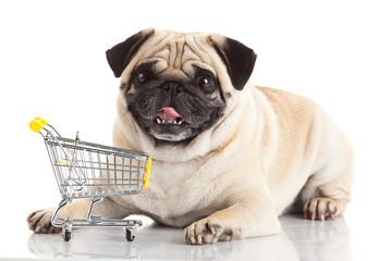 Pug dog with shopping cart isolated on white.