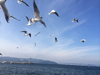 Martı Kuşları