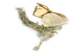 medical herb wormwood and linen bag for conservation