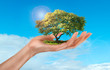 a woman's hand holding a tree on sky background