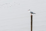 Seagulls standing on bamboo shore of the Sea
