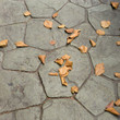 Dry leaf on ground