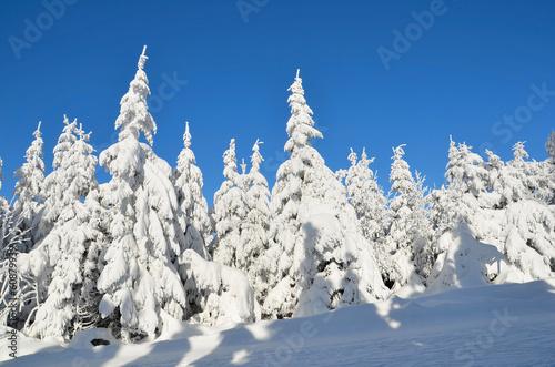 canvas print picture Winter am Ochsenkopf