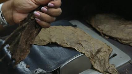 Cigar Production Handmade 02