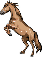 horse standing on hind legs