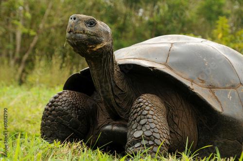 Tuinposter Schildpad Galapagos Riesenschildkröte