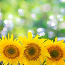 bordure floral