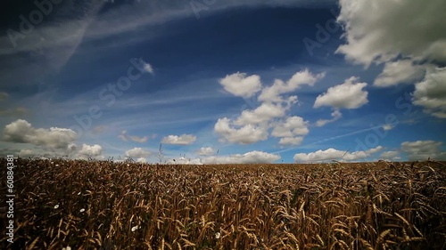 rapid movement of saturated clouds over wheat field