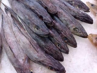 Pez merluza en mostrador pescaderia