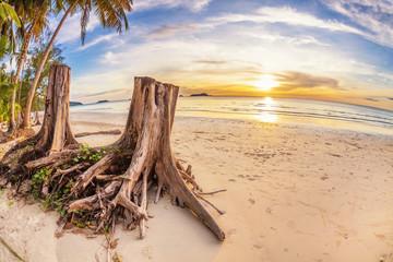tree stumps on tropical beach