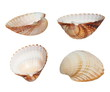 Collection Sea shells isolated on white background