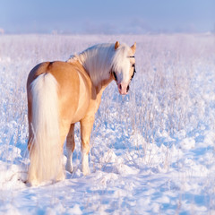 Stallion on walk.