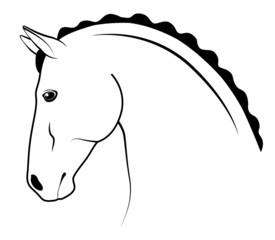 Show horse head