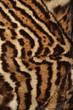 pelliccia di ocellotto