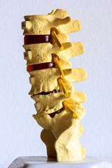 Model Of Part Of A Spine