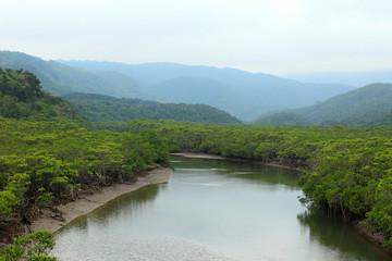 Shiira River and mangrove in Iriomote Island, Japan
