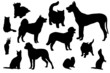 pets of people