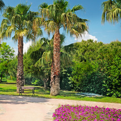 palm in the park