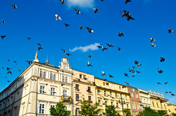 birds in krakow