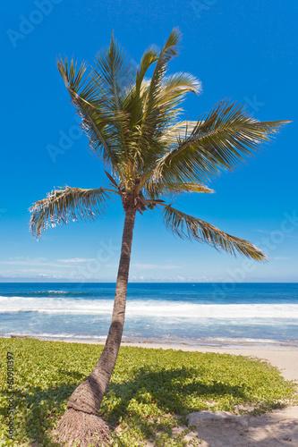 cocotier sur plage de Grande Anse, Réunion