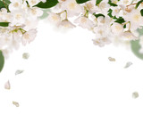 half frame from pure jasmin flowers isolated on white