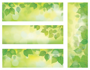 Vector nature banners, branch of birch tree with green leaves on