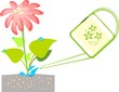 Illustrations with  flower and watering can