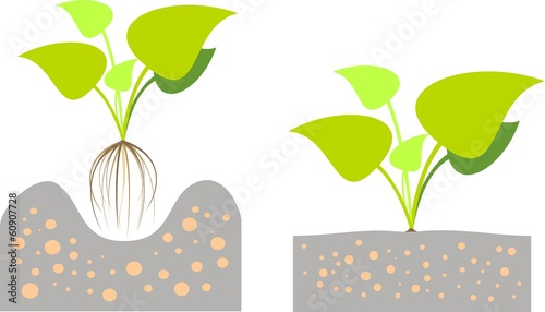 Illustration of   planting  plants in  the ground