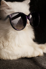 Kitten wearing sunglasses