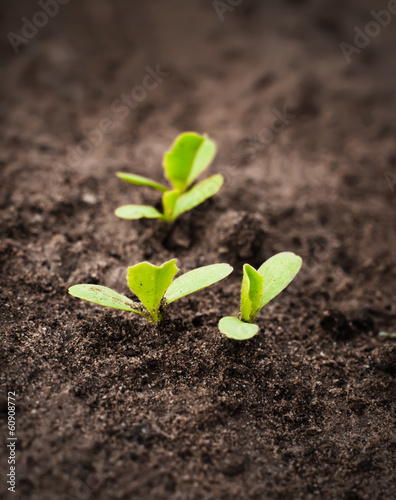 Close-up of green seedling growing out of soil.
