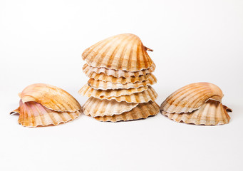 Scallops stacked and isolated on white