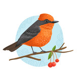 Vermilion Flycatcher beautiful bird vector illustration