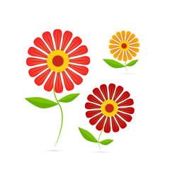Vector Illustration of Gerbera Flowers