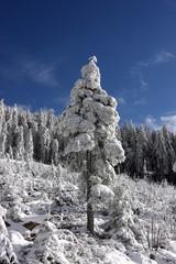 Winter im Hochschwarzwald
