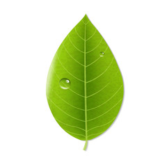Eco Green Leaf