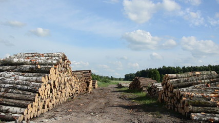 Panorama of wood fuel stacks and birch logs near forest