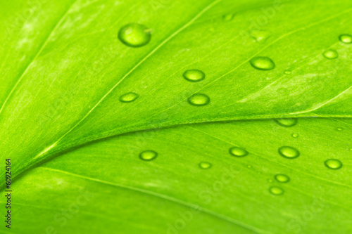 green leaf with dew