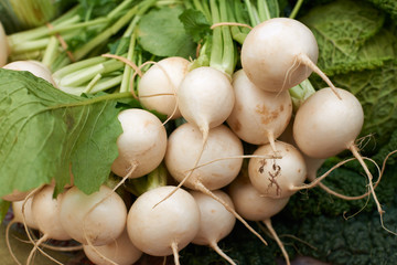 Fresh white turnip