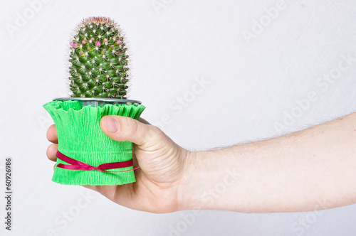 Male hand holding cactus in the flowerpot