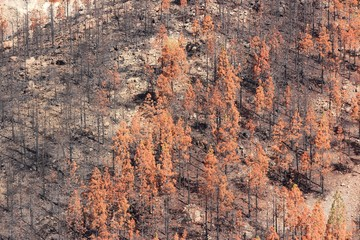 Forest fire effects in Tenerife