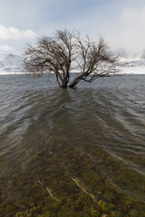 Arbol  en Embalse Nevado