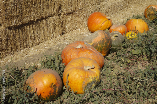 Hay stack and Orange Pumpkins