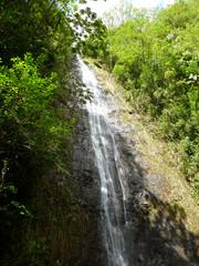 water runs down Manoa Falls waterfall