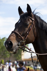 cavallo equitazione salto